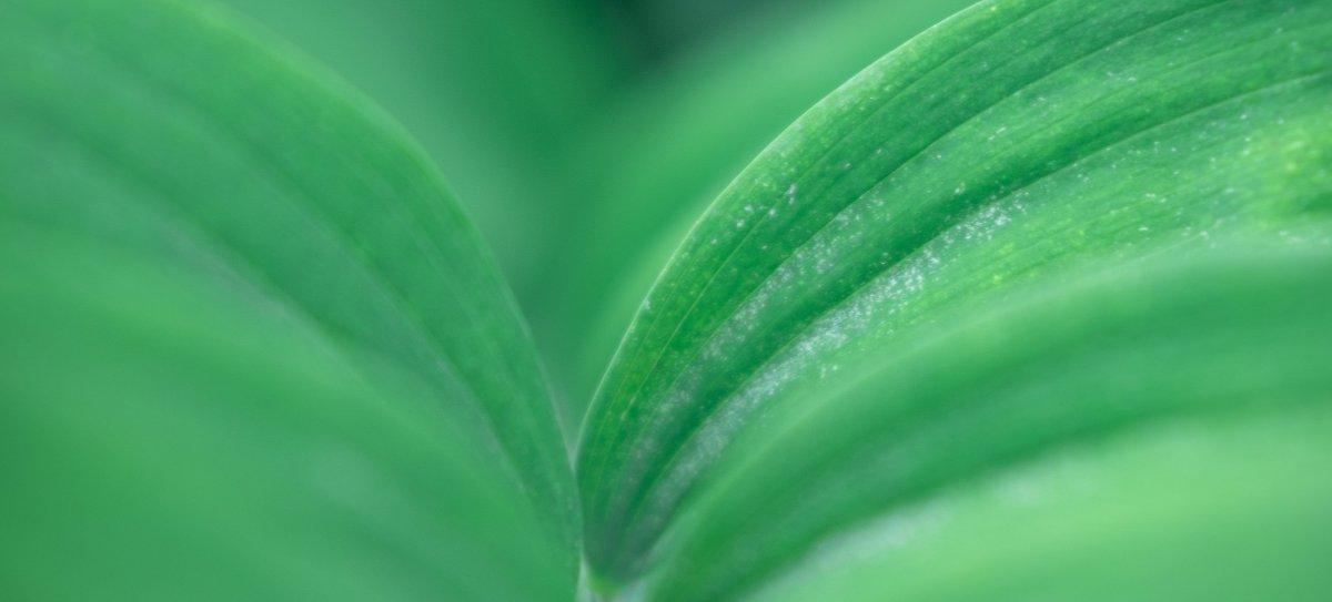 Duurzaamheid Live Puri blad