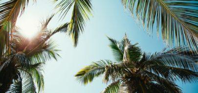 Palmbomen met kokos noten met zon